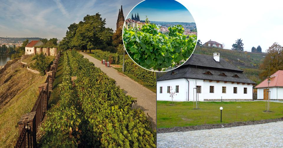 O víkendu proběhne druhý ročník akce Pražské vinice.