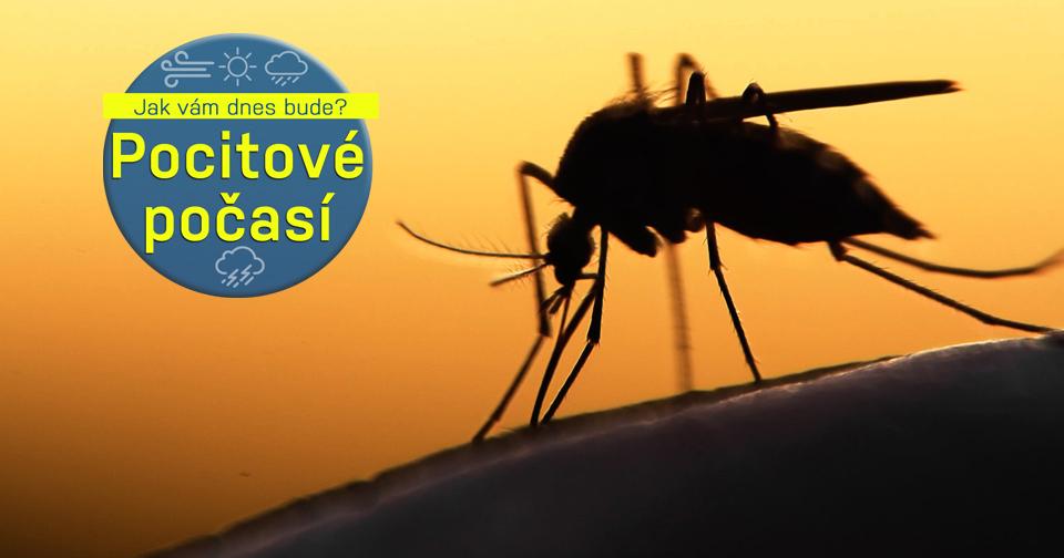 """9c2b5a1a296 Letní teploty probudí ve středu komáry do """"akce""""."""