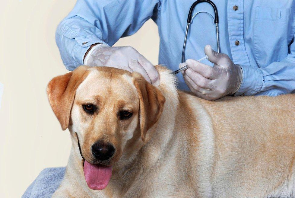 Dbejte na řádné očkování.