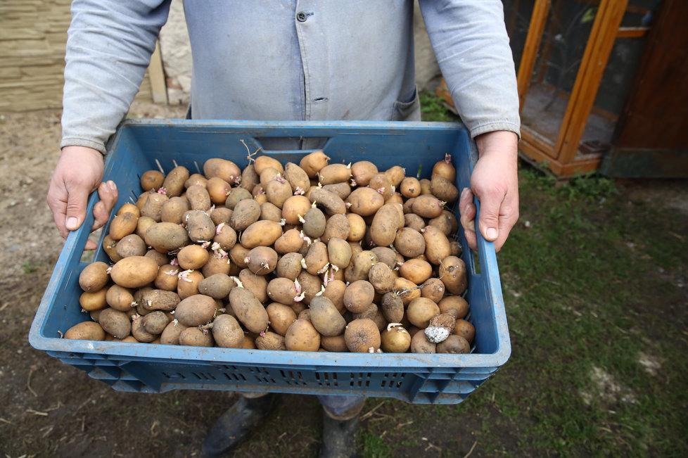 Jaké brambory byste neměli kupovat?
