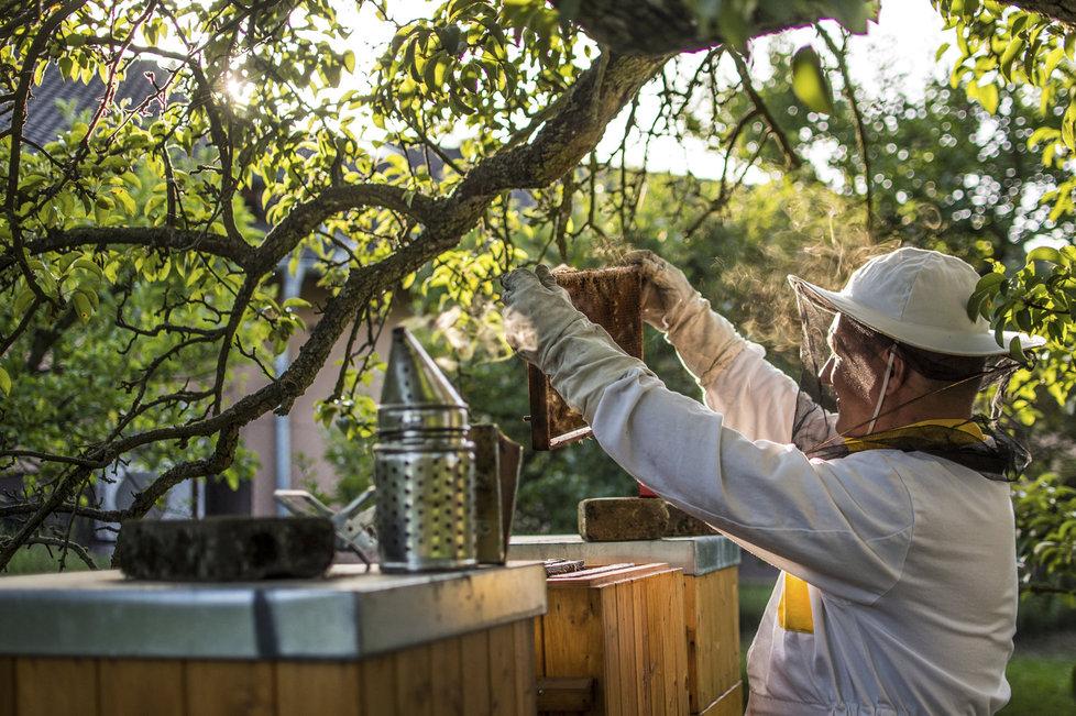"""""""V medu jsou jednoduché cukry a podporuje hojení. Už ve středověku věděli, že se rány nejlépe hojí po medu,"""" vysvětlil Peroutka."""