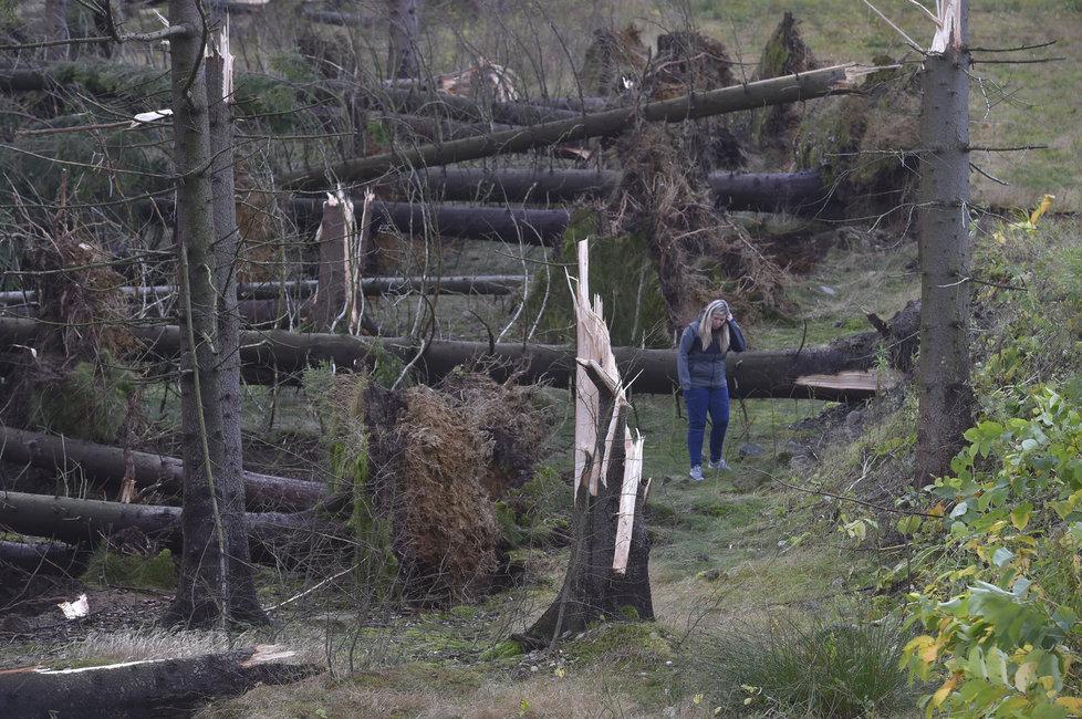 Vichřice poničila státním Lesům ČR asi milion kubíků dřeva.