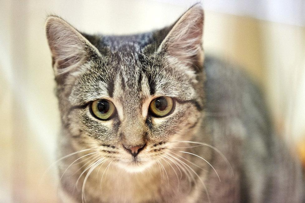 Botanická zahrada v Praze 2 hostí umisťovací výstavu koček. Můžete dát domov novému domácímu mazlíčkovi.