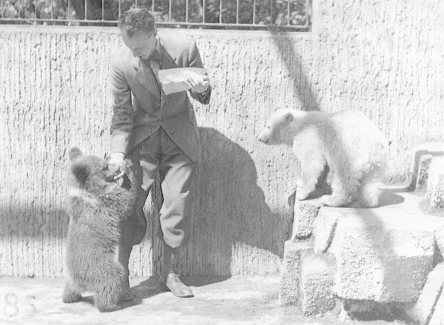 Sněhulka s ředitelem v medvědím výběhu, kde jim dělal společnost hnědý medvěd.