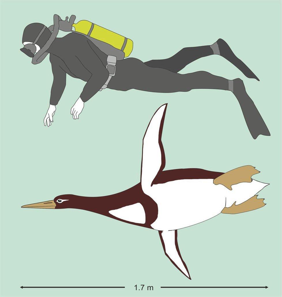 Nález prehistorické fosílie tučňáka