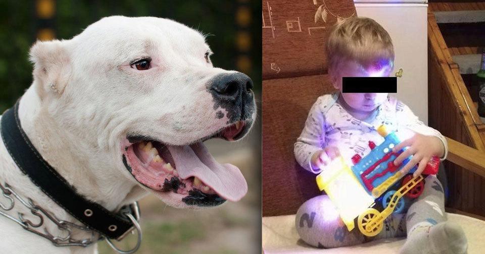 Zoufalá babička zakousnutého Vlastíka (†1): Lituje, že pes nekousl ji, místo dítěte.