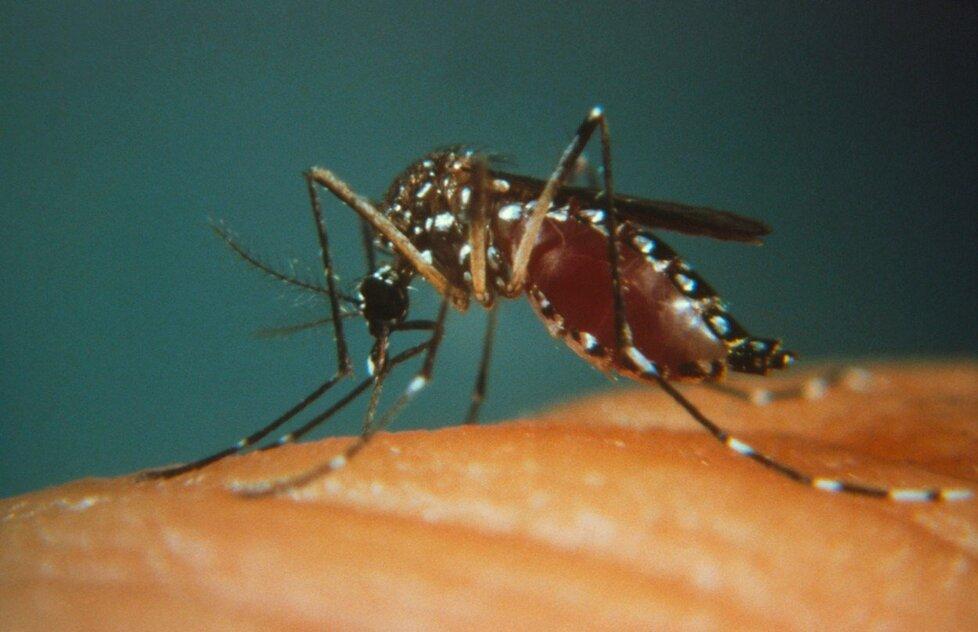 Žlutou zimnici přenášejí hlavně komáři.