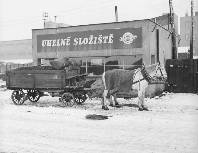 Koňské potahy pomáhají urychlit rozvoz uhlí po Praze (1951).