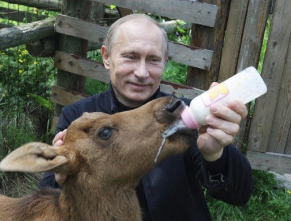 Ruský prezident Vladimir Putin má věřit starému ruskému rituálu, že koupel v jelení krvi přináší zázračné účinky