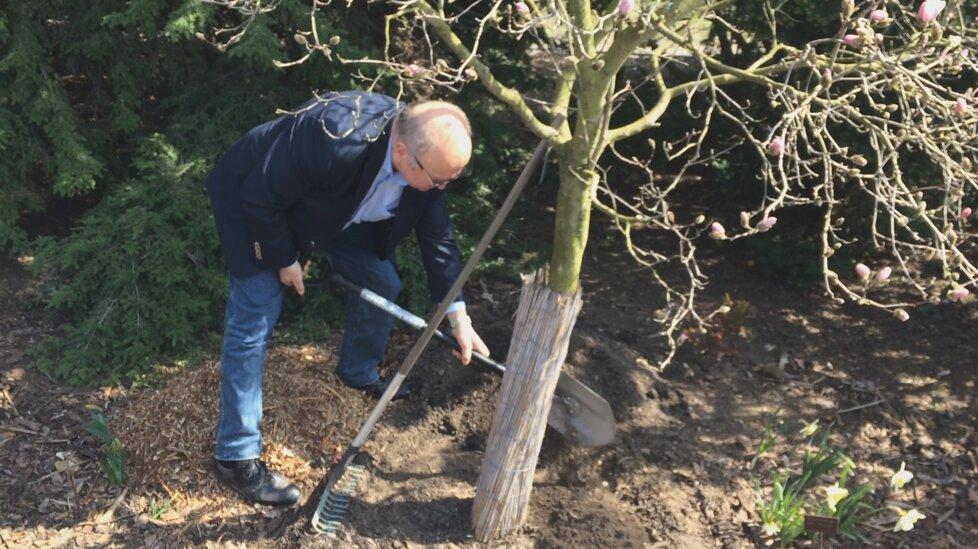 Vladimír Remek letěl do vesmíru před 40 lety, v pražské botanické zahradě zasadil strom.