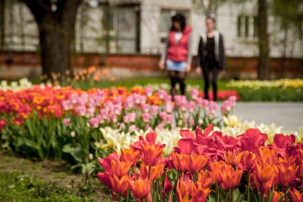 Mezinárodní květinová výstava Flora Olomouc