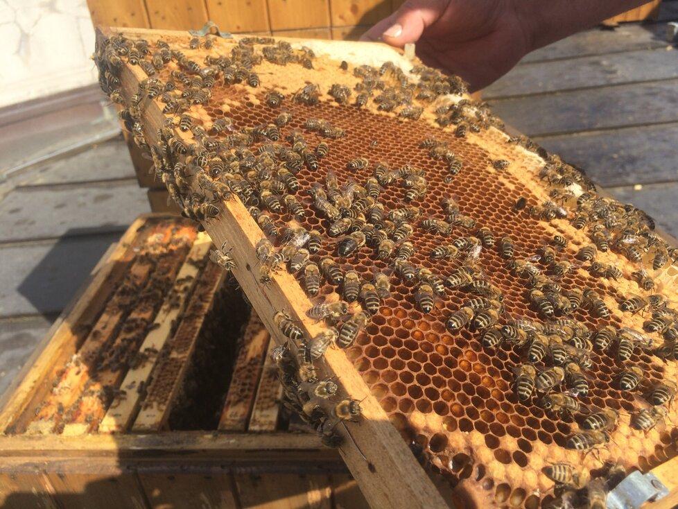 Včelí med je úžasný životabudič, který dodává našemu tělu spoustu živin.