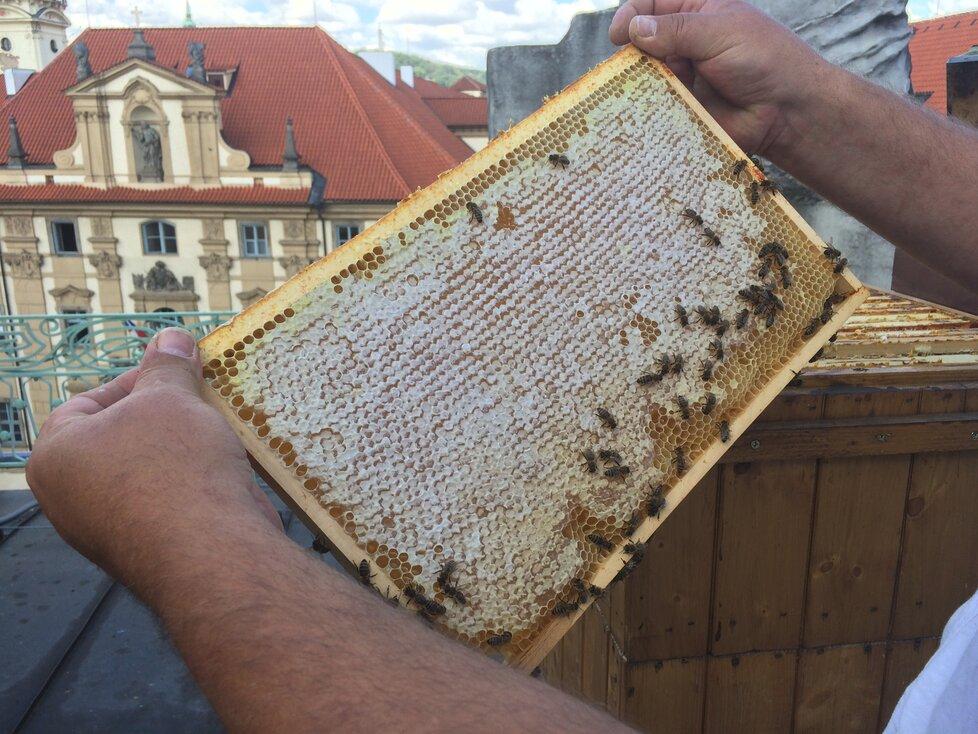 Takto vypadá vnitřek úlu.