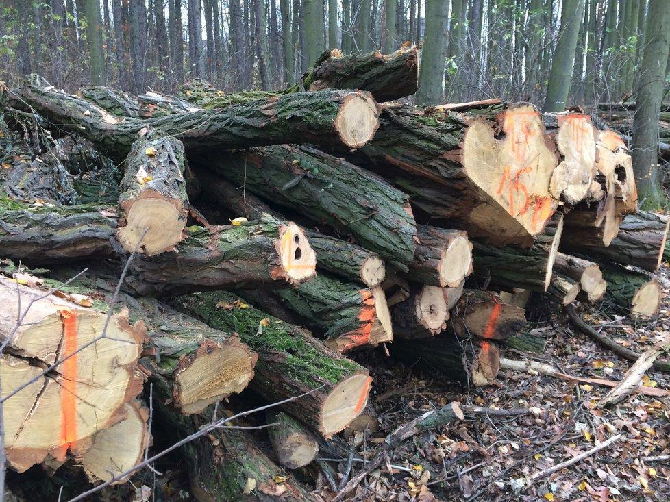 U barrandovských filmových ateliérů vykáceli kus lesa. (14.11.2018)