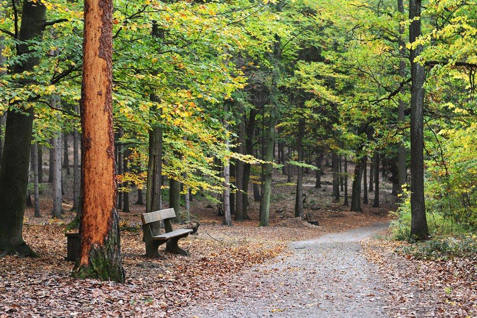 Na území Prahy 10 se nacházejí i lesní porosty, například v případě Malešického lesa. (ilustrační foto)