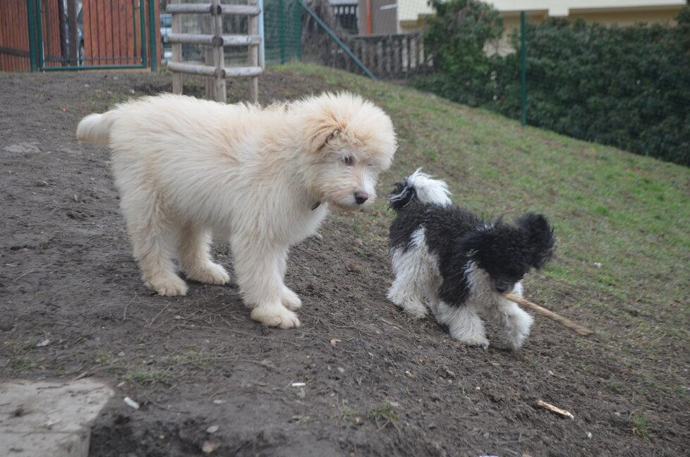 Po týdnu v dočasné péči je z Arga jiný pes. Dobírá sice ještě antibiotika, jeho srst je už ale hebká, voňavá, a také už přibral