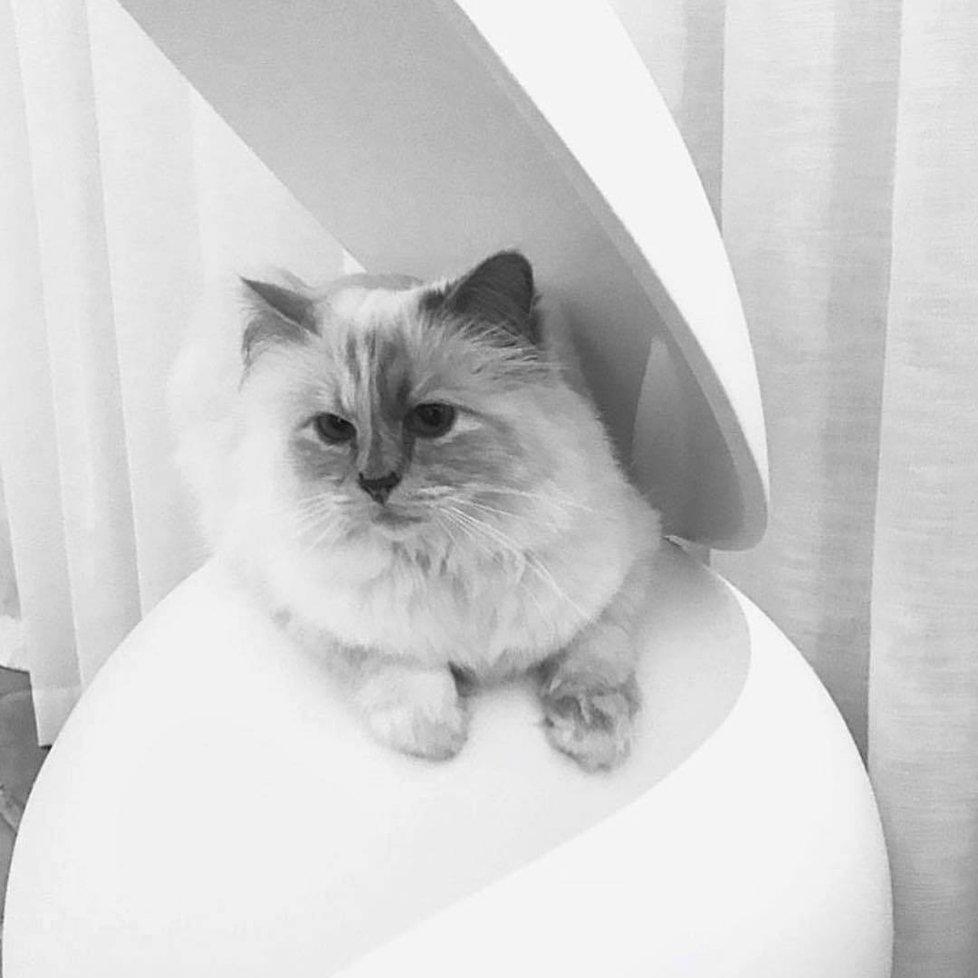Velké boky a kočička