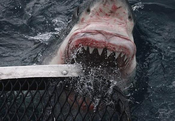 Fotograf zachytil blízké setkání s lidožravým žralokem bílým. Od jeho ruky se nacházel jen několik centimetrů.