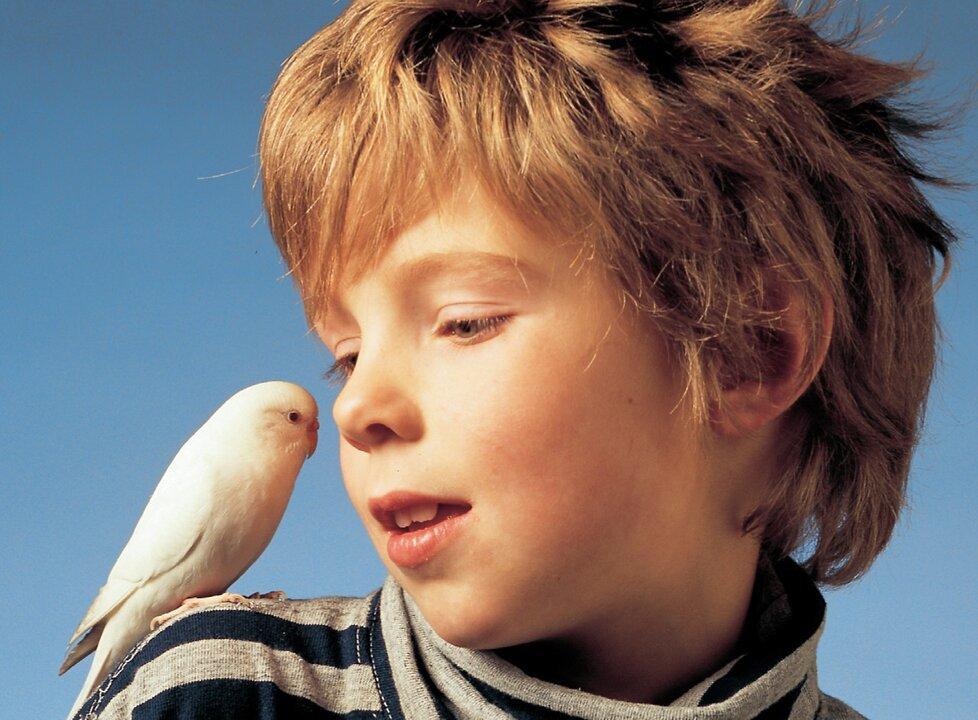 Děti andulky milují.