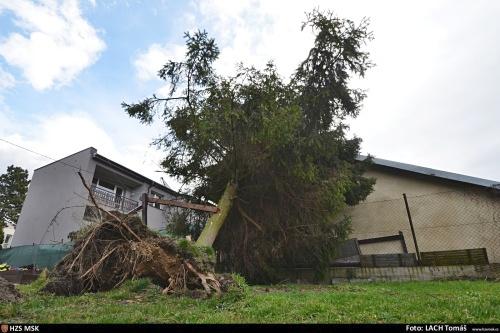 V pondělí kolem poledne zasahovali hasiči v Ostravě - Mariánských Horách v Kubelíkově ulici u vyvráceného smrku, asi 10 metrů vysokého. Zůstal opřený o menší zděný domek.