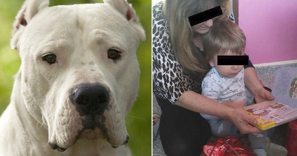 Na konci roku 2017 zabil pes teprve roční dítě