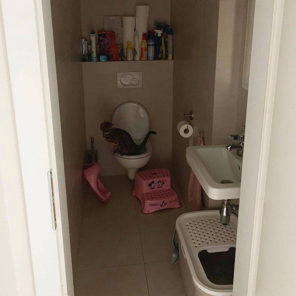 Takovou kočičku by doma chtěl každý! Vychovaná Arya vykonává potřebu na lidské toaletě