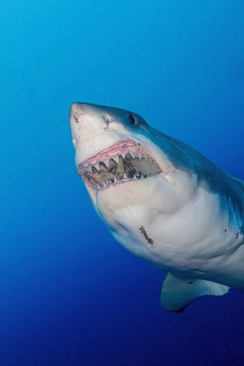 Při focení selfie zemře víc lidí než při útocích žraloka.