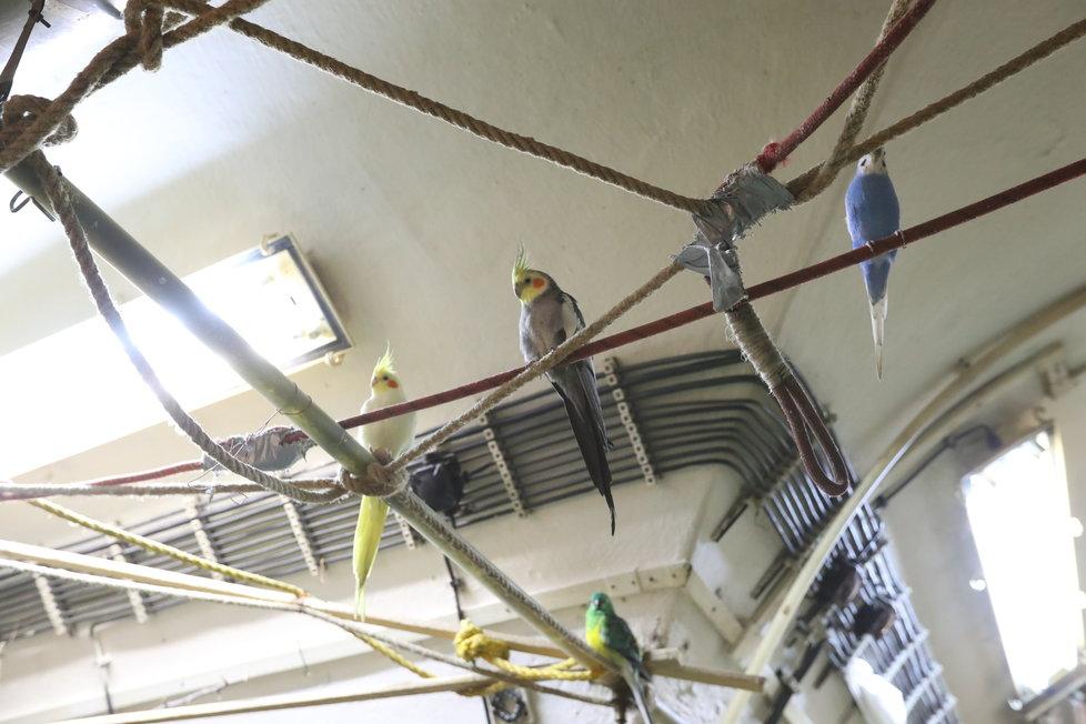 Pohled, kterého by se v podzemí člověk nenadál. Spokojení papoušci!