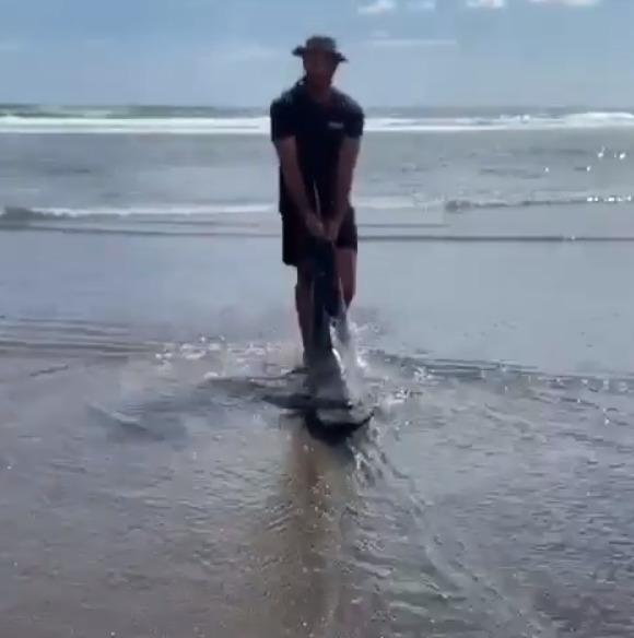 Záchrana lidožravého žraloka: Muž si všiml predátora zamotaného do lana a odtáhl ho do moře.