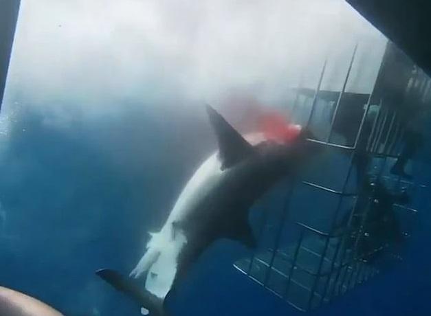 Další smrtelný útok žraloka: Predátor zabil mladého surfaře (ilustrační foto)