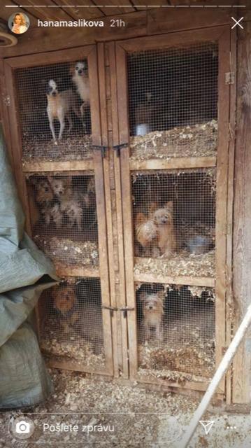 Takhle vypadají mnohé psí množírny v České republice