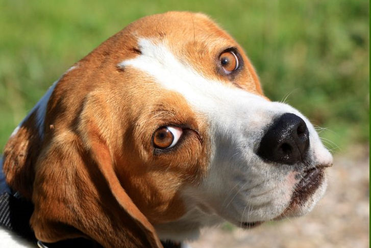 ae909c51988 Jak chytrý je váš pes