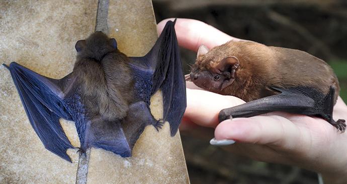 V Peru málem upálili dvě stě netopyrů z obavy, že by od nich mohli chytit koronavirus. (ilustrační foto)