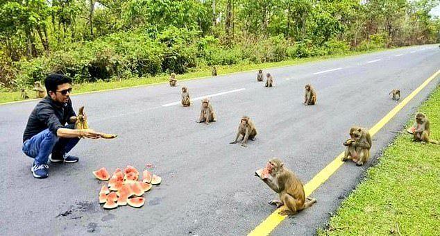 Opice ukázaly, že chápou, co je sociální odstup.