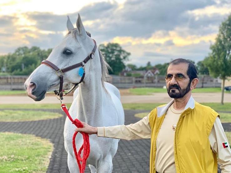 Dubajský šejch Muhammad je velkým milovníkem koní.