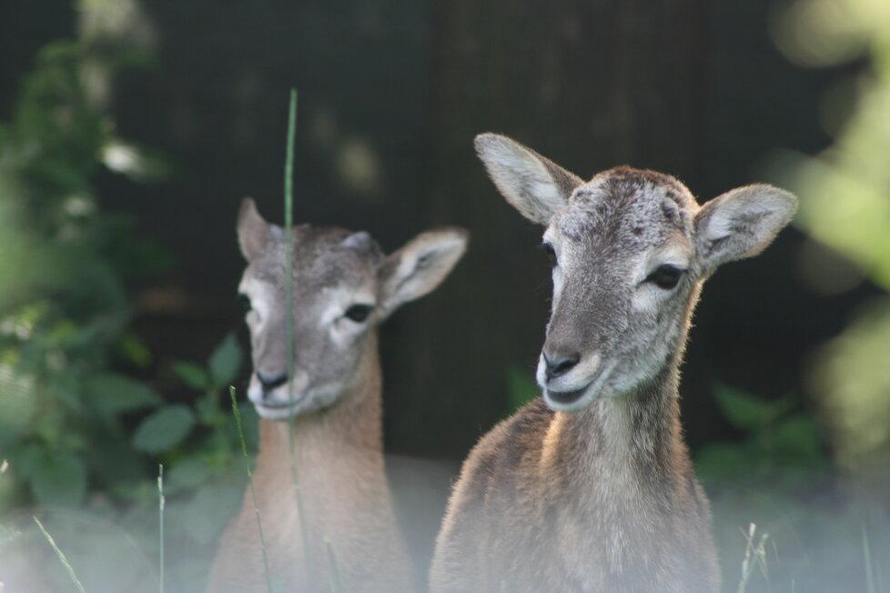 Zvířata v Záchranné stanic pro volně žijící živočichy v Jinonicích.