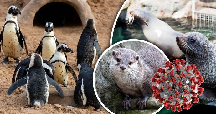 Britská zoo kvůli koronaviru oznámila krach.