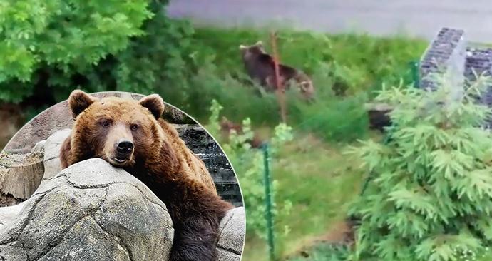 Slovenskou rodinu probudily podivné zvuky: Na zahradě byla medvíďata.