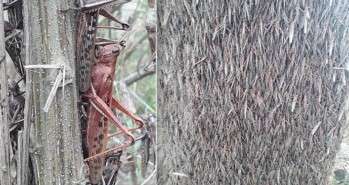 S kobylkami bojují i farmáři v Argentině.