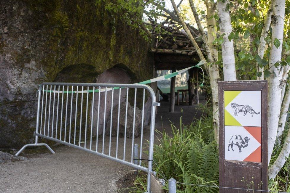Tragédie v zoo v Curychu: Tygřice zabila ošetřovatelku (4.7.2020)