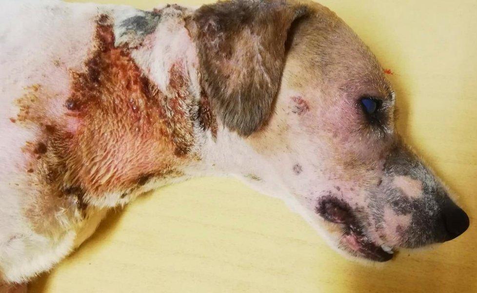 Takto medik Martin Š. svého psa zřídil.