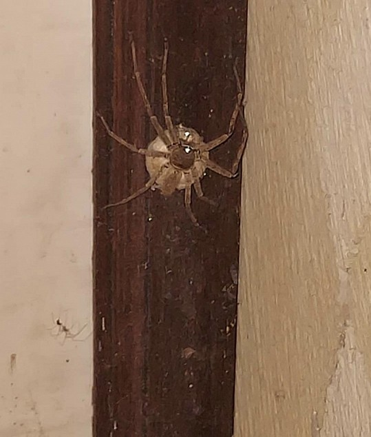 Helenu Houdovou pokousal pavouk
