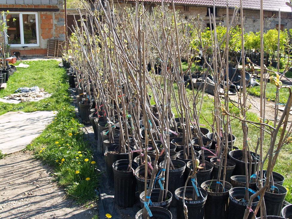 Na starém statku ve Vykáni najdete stovky exotických plodících stromků.