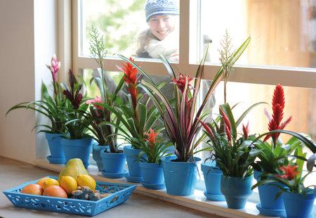 Bromélie dodají vašemu bytu exotickou atmosféru
