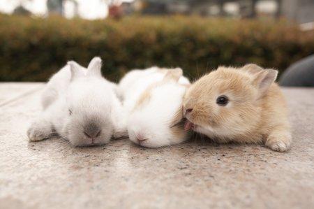 Mláďata králíčků si nejde nezamilovat.