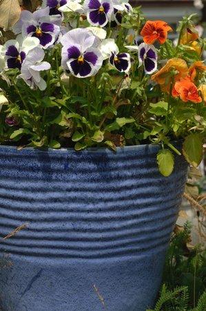Macešky vám krásně ozdobí zahradu či dekorativní květináče a truhlíky.