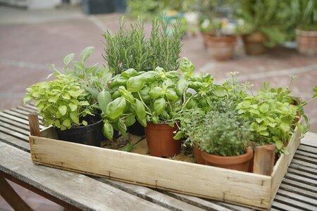 Bylinky můžete pěstovat i v zimě.