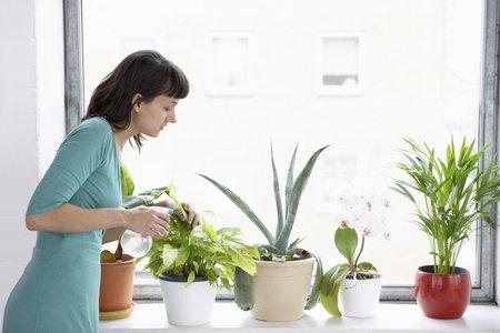 Připravte své domácí květiny na vaši nepřítomnost.