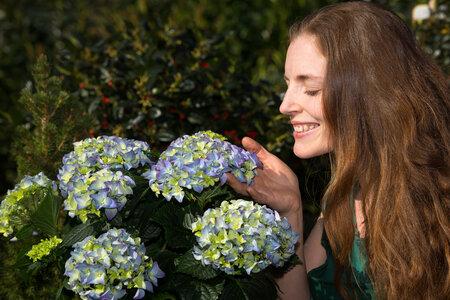 Modré hortenzie budete mít na zahradě díky speciálnímu hnojení.