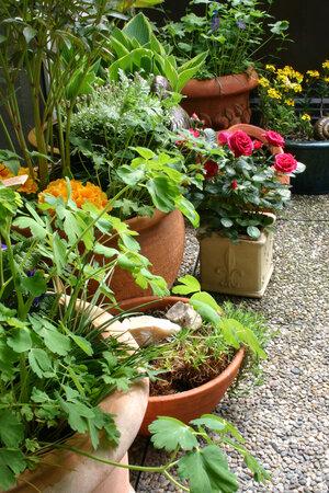 Rostliny, které trávily zimu doma, musíte na venkovní pobyt zvykat pomalu.